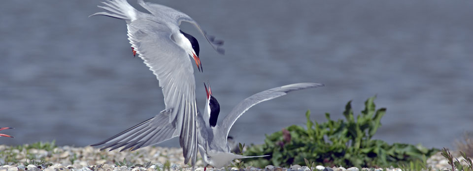 slider-kustbroedvogelfonds